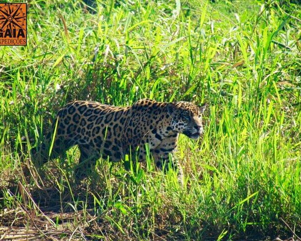 251_Pantanal