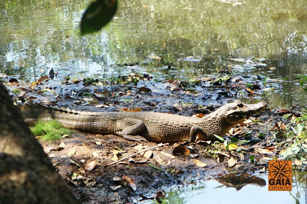 268_Pantanal2_home