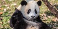 166_Pandas