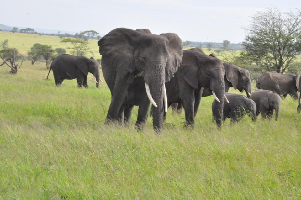 175_nossa_grande_viagem_africa