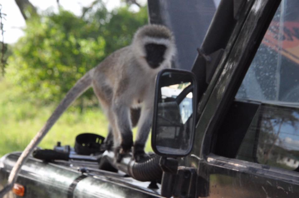 179_nossa_grande_viagem_africa