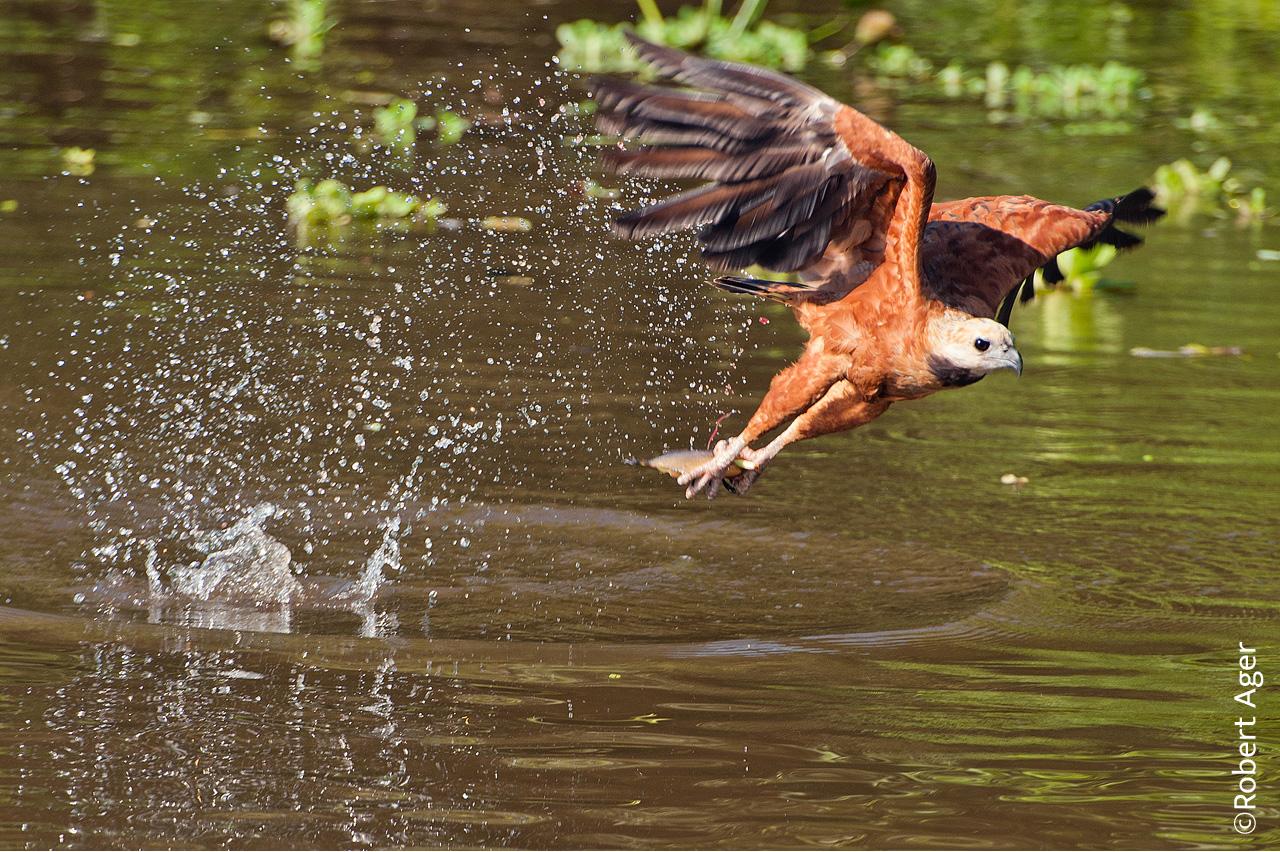013_OverlanderBrasil_Pantanal