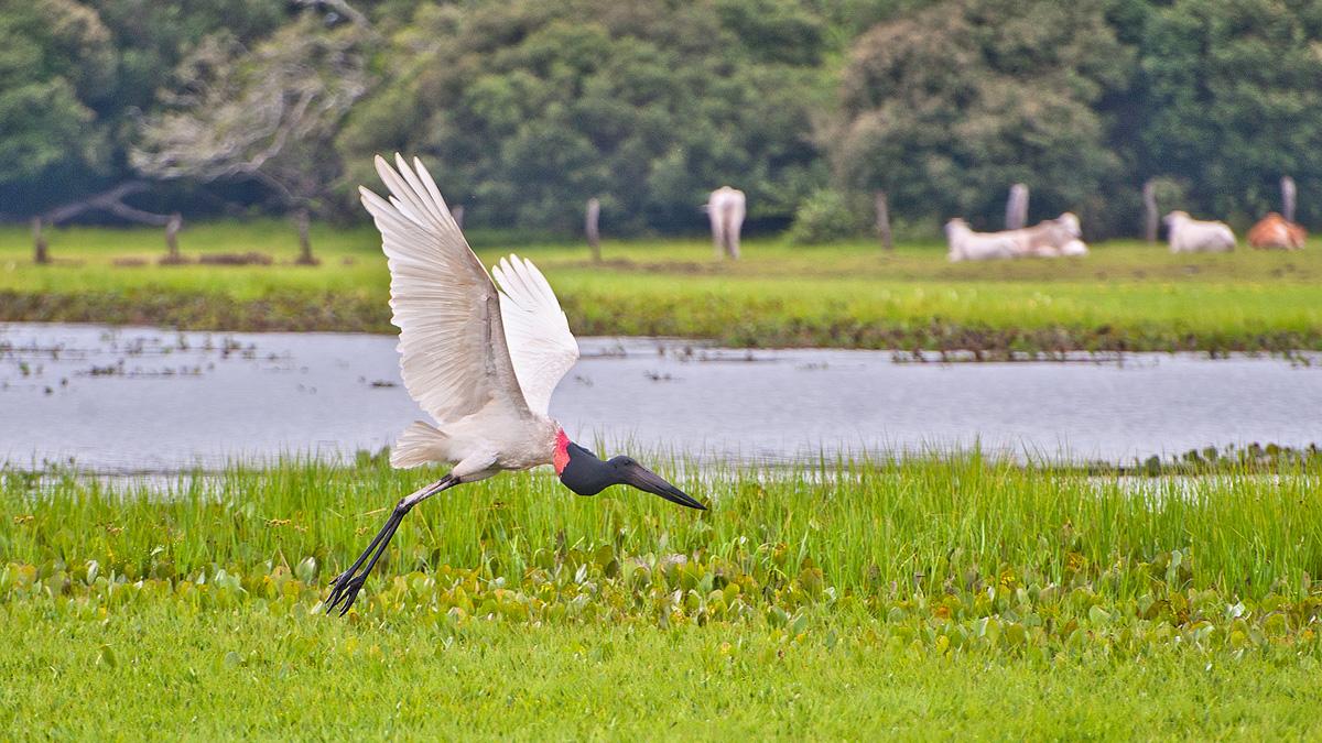 004_Overlander_Gaia_Pantanal