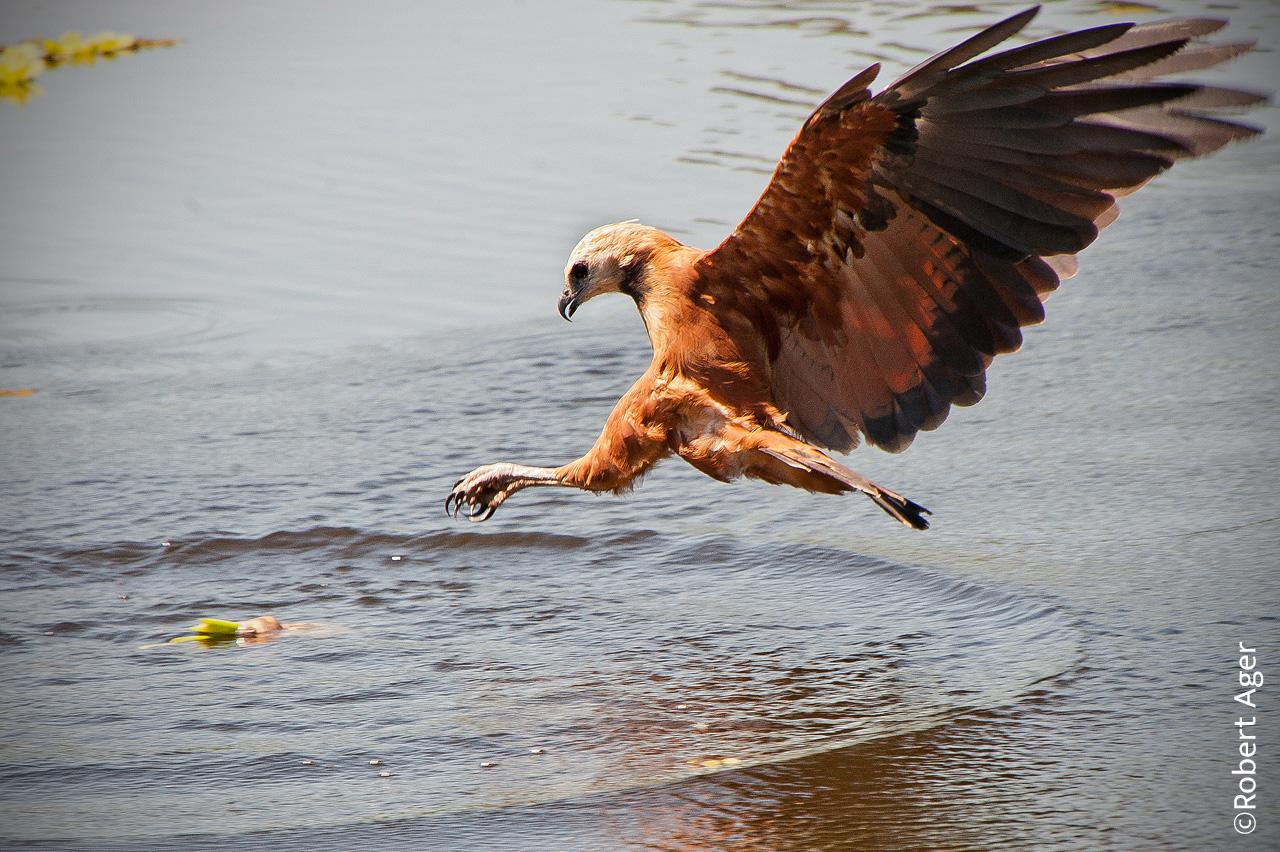 023_Overlander_Gaia_Pantanal