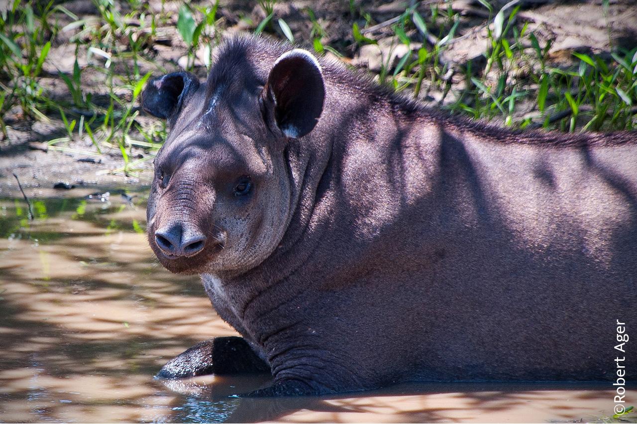 028_Overlander_Gaia_Pantanal